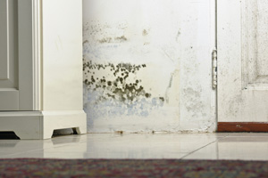 Mold testing and inspection services from Brawley's experts